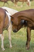 Pair of Nuzzling Horses
