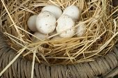 Organic White Domestic Eggs In Vintage Basket poster