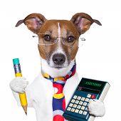 Sekretär-Hund