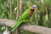 picture of polly  - parrot perched on a wooden beam against a leafy background - JPG