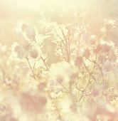 Vintage Background With Nature Elements