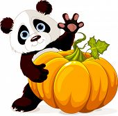 Cute little panda holding giant pumpkin