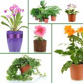 Collage of various flowers in flowerpots