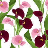 Seamless pattern with pink and purple calla lilies on white. Vector illustration.