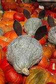 Pumkin field mice