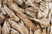 Pieces Of Ornamental Dried Wood