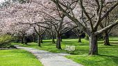 Cherry Blossom Bench