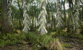 Landscape - Strange Forrest