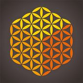 pic of universal sign  - With three different colors it is possible to create a cube from the Flower of Life - JPG