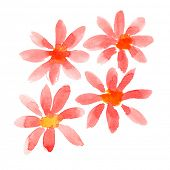 Red watercolor flowers isolated over the white background