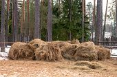 Group Of Haystacks Laying On The Farm In Winter Forest