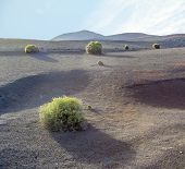 Volcanic Landscape In National Park Timanfaya