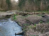 stock photo of driftwood  - natural scenery with lots of driftwood on a small river and forest in Southern Germany at early spring time - JPG