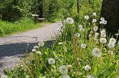 Hiking Trail With Resting Bench, Faded Dandelions
