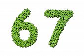 Duckweed Alphabet Letters - Number 6, 7 Isolated On White Background