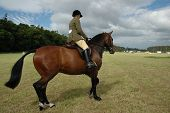 Pferd mit Jockey in Dressur-tests