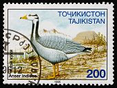 Postage Stamp Tajikistan 1996 Bar-headed Goose, Bird