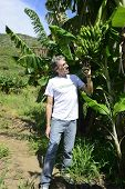 Agriculture: Farmer examining the banana plantation