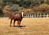 Large Strong Brown Colt Horse In Hd
