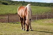 stock photo of horses eating  - alone animal blonde countryside eat grass horse nature relaxation rural - JPG