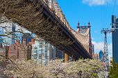 Bridge blooming trees and a view on Manhattan New York.