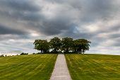Elm grove