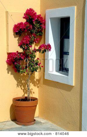 Постер, плакат: Греция Острова цветочный горшок, холст на подрамнике