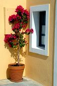 stock photo of flower vase  - flower pot in the greek islands