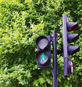 Traffic light against the green tree background