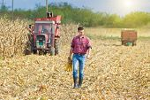 Farmer On Corn Harvest