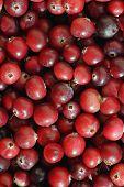 Cranberries Closeup.