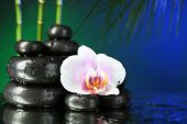 Orchid flower with water drops and pebble stones on dark colorful background