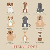 Set Of Iberian Dogs
