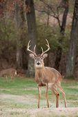 foto of deer rack  - Large white - JPG