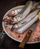 Famous fresh Baltic fish smelt or korjushka