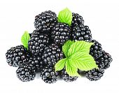 blackberry with leaves isolated on the white background