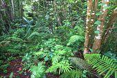 Toro Negro Rainforest - Puerto Rico