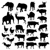 Black silhouettes of elephants, cows, bulls, chickens, deer on white background. vector