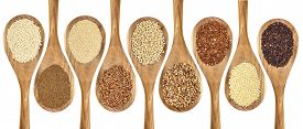 picture of sorghum  - a variety of gluten free grains  - JPG