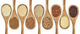 foto of millet  - a variety of gluten free grains  - JPG
