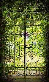 stock photo of gate  - A gate hides a green flower - JPG