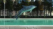 pic of mammal  - Marine mammal swimming in the swimming pool - JPG