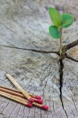 picture of decomposition  - Green conceptSeedling growing in a timber and matches Focus on matches - JPG