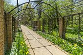 picture of pergola  - Pergola in the park the view from the inside - JPG