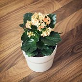 picture of flower pot  - One potted flower - JPG