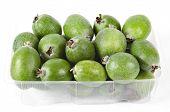 Feijoa  (Acca sellowiana) - Pineapple Guava