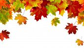 stock photo of fall leaves  - Autumn card of colored leafs - JPG