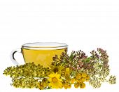 cup of herbal tea and fresh herb isolated on white background