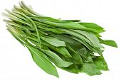 Fresh wild garlic leaves on a white background , Ramson