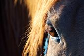 foto of beautiful horses  - a horse - JPG